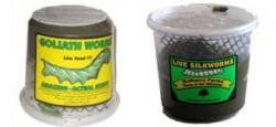 hornworms, silkworms